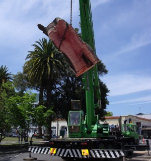 Tree Removal Hawkes Bay